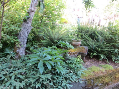 Along the same side of the garden as the pond, a wall drips with ferns over a path lower than the lawn.
