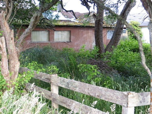 """Just east across the street from the """"berm"""" we weeded is a little lost house and lost garden."""