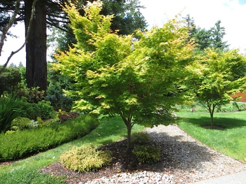We'll admire this maple from another angle later.