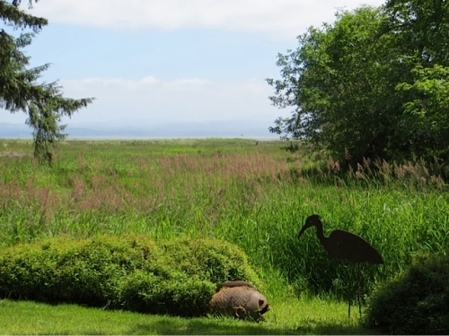 right on the marsh and overlooking Willapa Bay