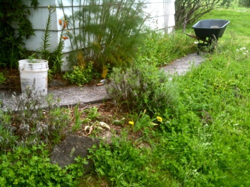 before: the little curved garden had disappeared