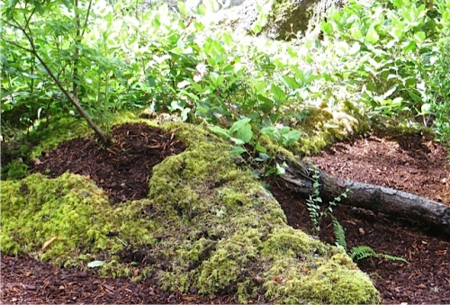 The garden abounds in natural, mossy vignettes like this one.