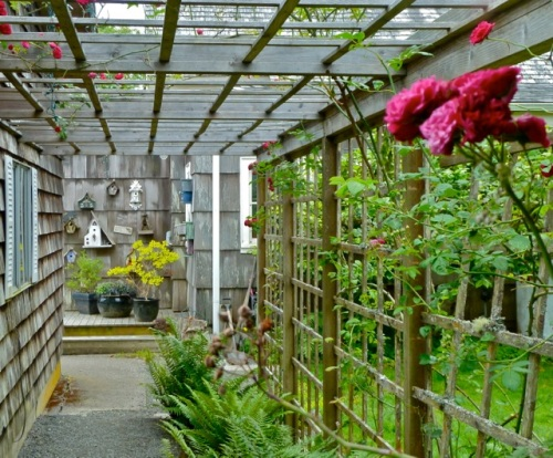 Allan's photo of Patti's pergola