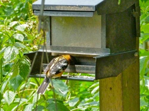 Allan's photo; Bob Barca loved birds.