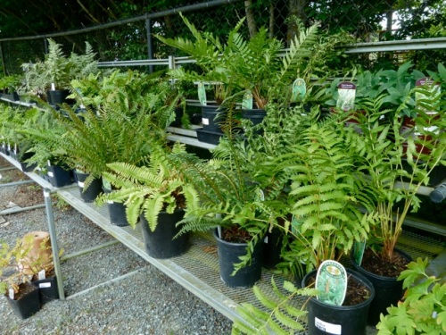 Allan found the fern collection.