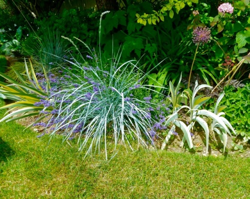 "Allan's photo:  ""beach grass out front drew approving comments with its highlighting the other plantings"""