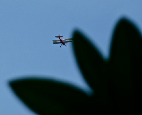 Allan's photo: He noticed this biplane flying over as we entered the garden.