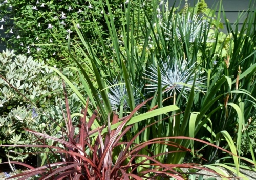 metal Alliums