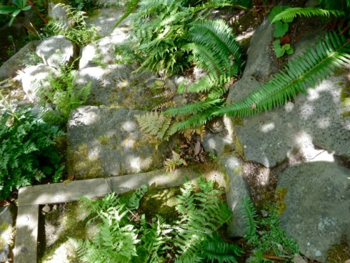 A fern covered old path would down under the house while the main stairs were over on the natural stream side.  We stepped carefully.