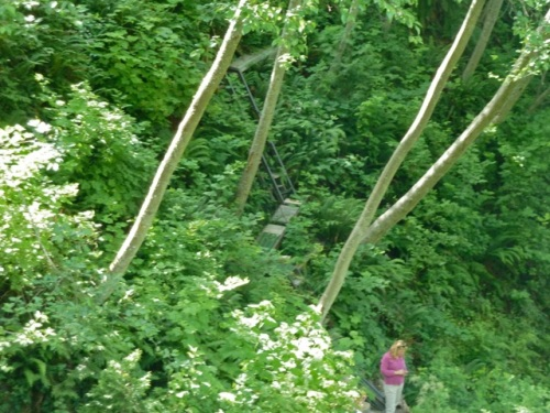 The woman is standing at the near side of the rope bridge.  Beyond, a steep wood stairway enters a woodland trail that hugs the ravine.