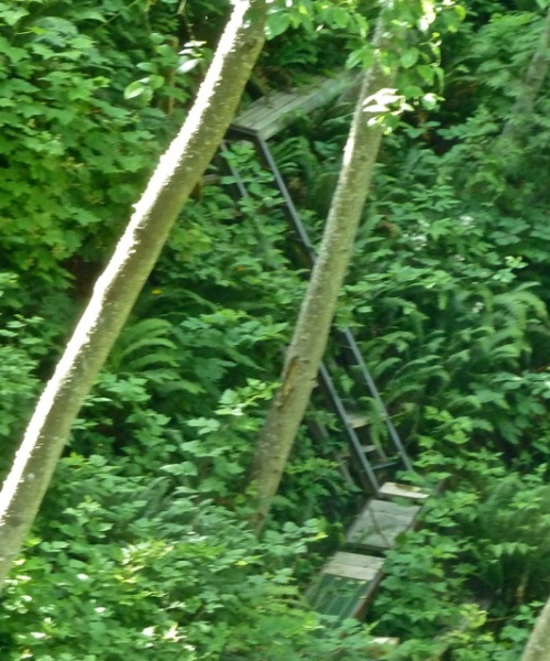 an enlargement to show the ladder-like stairway