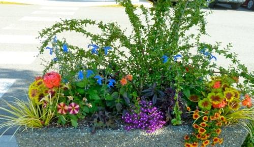 parking lot planters