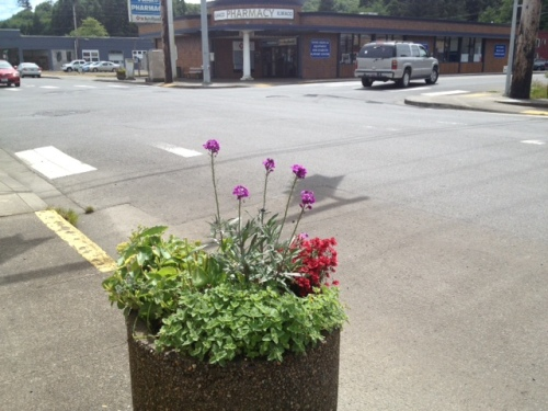 I worried whether the city crew would water the Ilwaco planters well enough.