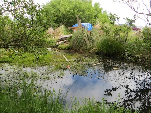 the pond and kids' fort