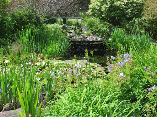 Cheryl and her husband built this pond with waterfall.