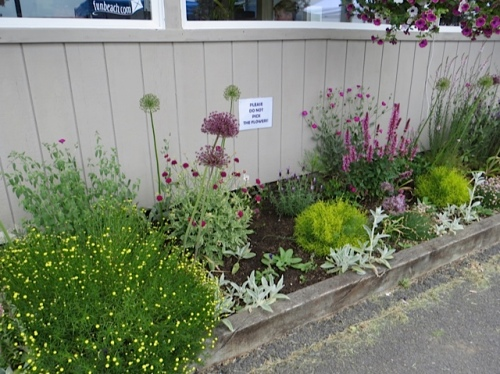 The port office garden has some new Do Not Pick signs made by office manager Nancy!