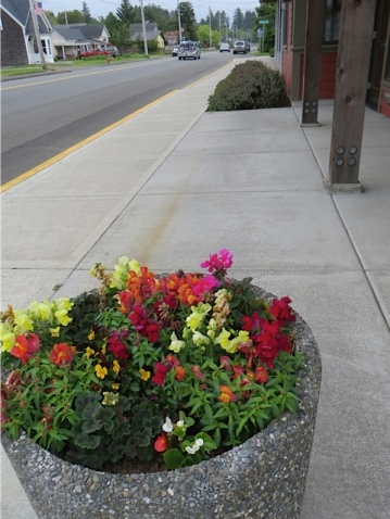 The fire station folks have planted up their street planter, too.