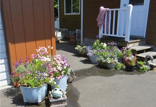 Diane's potted garden