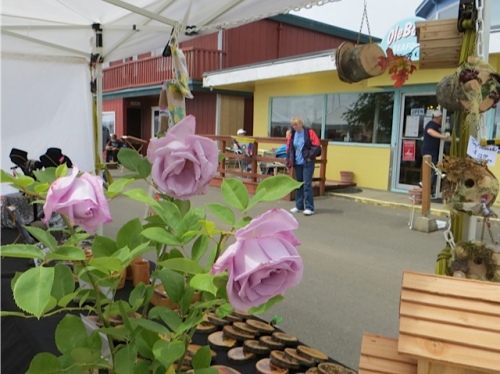 a lavender rose in the Knotty and Nautical booth
