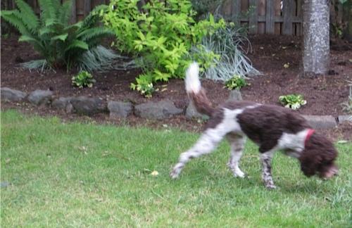 Patti's little dog Stella is always on the move.