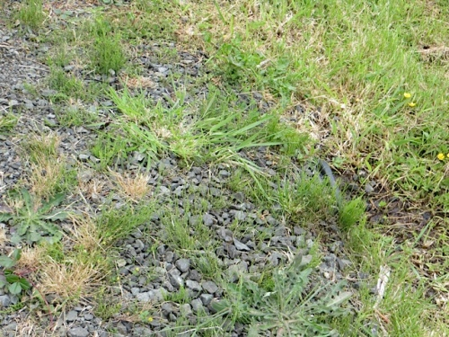 All around the sign: horsetail, which is why it is so infested.