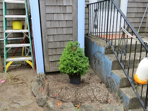 I assume the tree will stay in a pot; the door behind needs to be able to open.
