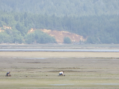 the view, low tide on Willapa Bay with oyster men