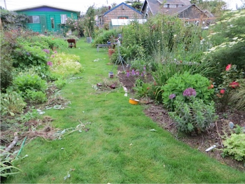 the back garden with weeds scattered around