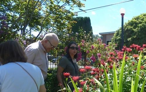 garden admiration