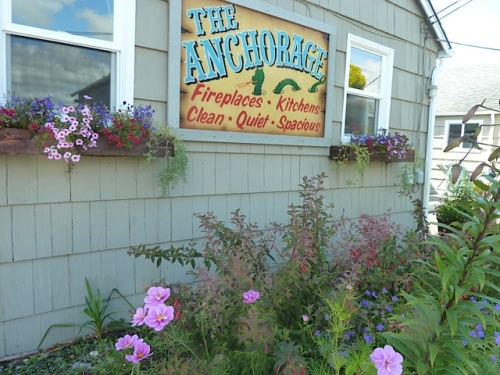 Anchorage, where we cut the stinky viburnum back earlier in the year,