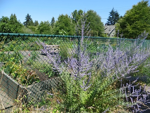 At the back of the parking lot was an impressive fenced kitchen garden.