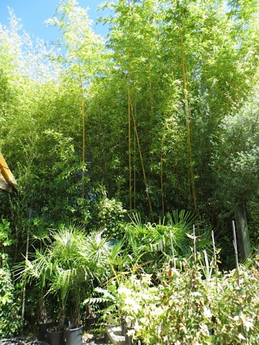 We could hear the gentle sound of an employee raking gravel along the bamboo grove path.