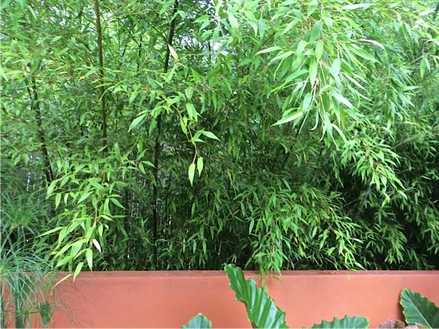 bamboo behind the wall