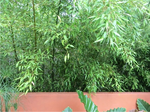 bamboo behind the wall