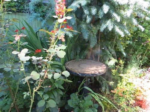 in the back garden