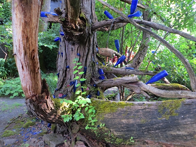 the memorable blue bottle tree