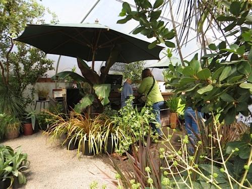 bloggers buy plants