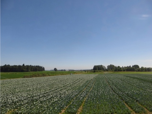 """The farms are part """"edible"""" (cabbages, and in fall corn mazes for fun and fear)"""