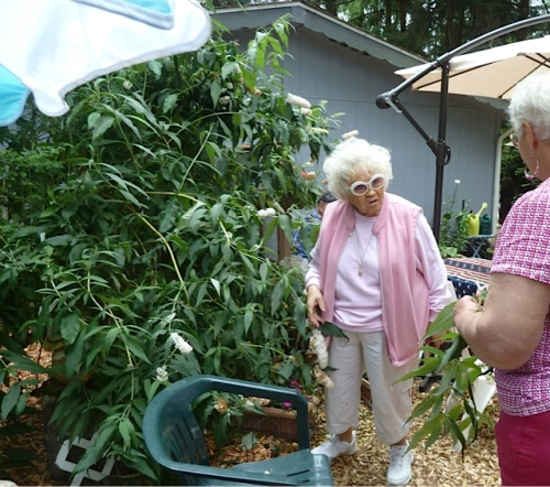 Darla giving a white buddleia cutting to a tour guest