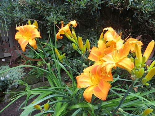 daylily...a hint of brightness to come
