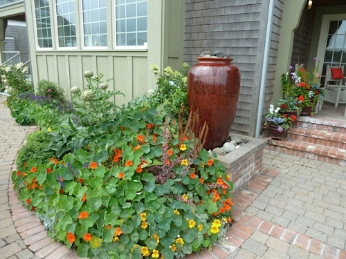 by the front porch, nasturtiums and a pot with an artichoke