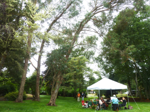 To the north of the pergola, a Eucalyptus grove leans gracefully over the music tent.