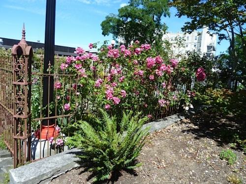 roses inside an ornate fence