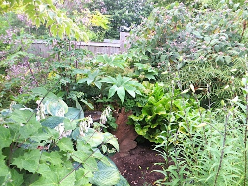 shrubs toward the back fence