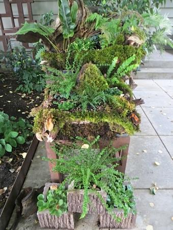 raised fern display