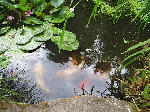 little pond, big fish
