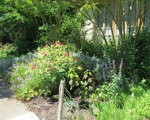 in the front garden