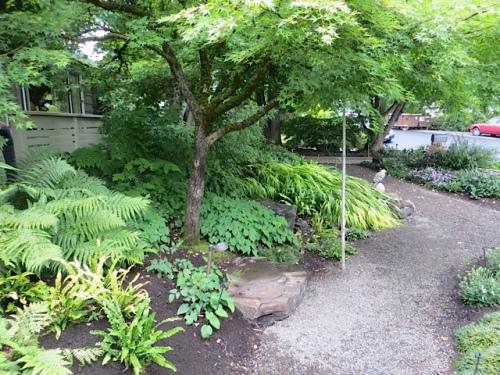 woodsy front garden