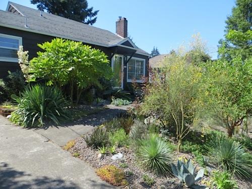 front garden beside the driveway