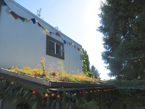 a green roof next to the garage apartment